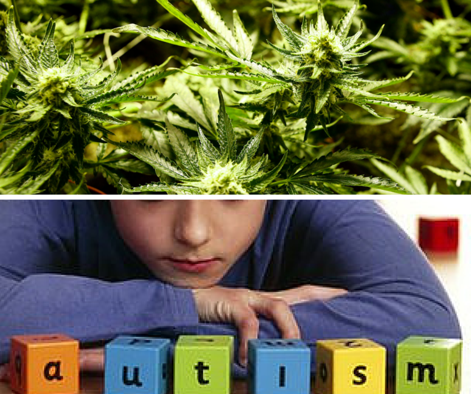 cannabis helps autistic